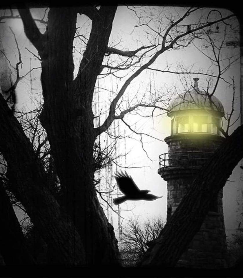 Raven & the Lighthouse
